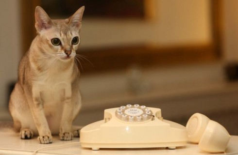 Кошка обратилась за помощью в Службу Спасения
