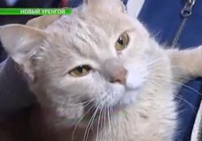 Компания из Нового Уренгоя взяла на работу кота