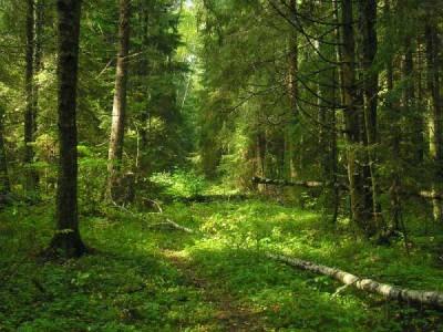 Лес Омской области