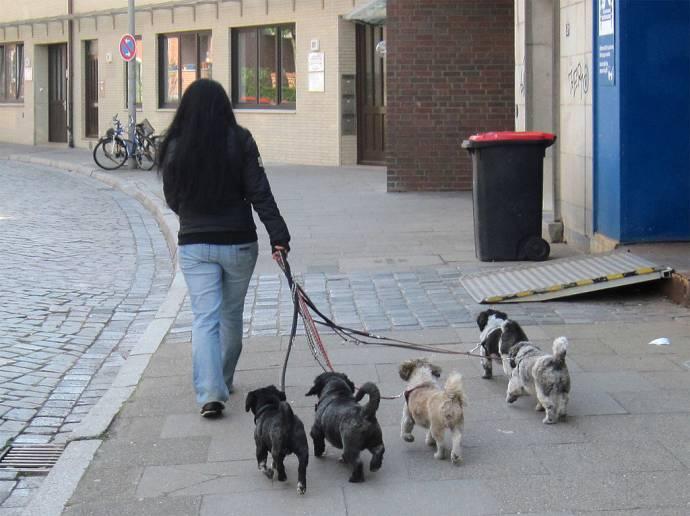 Гамбург – лучший город для собак