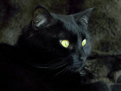 В Челябинске отметят День Черного кота