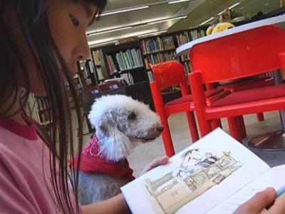 В Финляндии появились книжные собаки