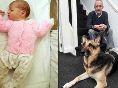 В Великобритании овчарка спасла младенца