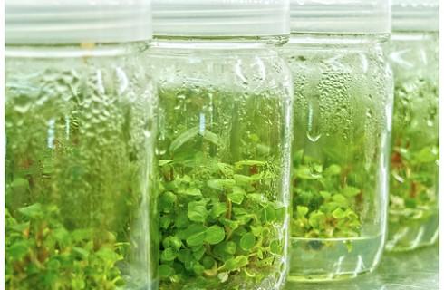 В Костроме покажут клонированные растения