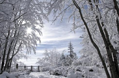 Сюрпризы декабря