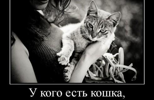 Почему кошка гуляет сама по себе?