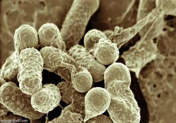Русские ученые взяли иммунитет под контроль