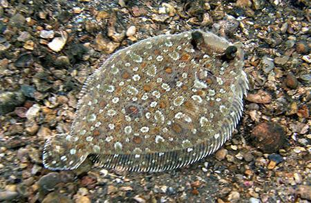 В ЕС вводят квоты на вылов рыбы в 2014 году