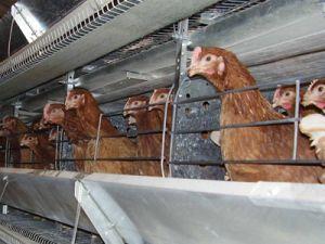 Голый протест ради благополучия животных