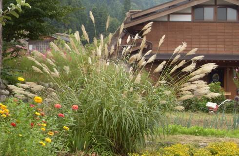 Бийские ученые изобрели доступную биоткань