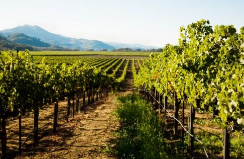 В Испании нашли древние виноградники