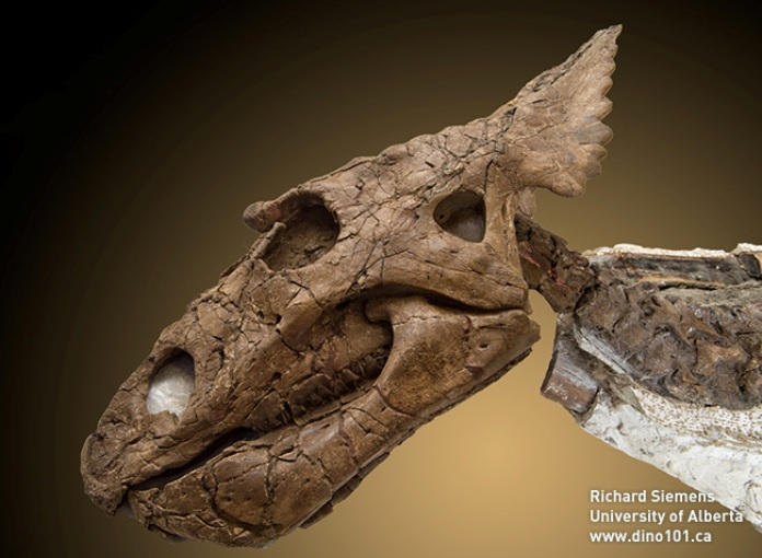 Канадцы нашли динозавра