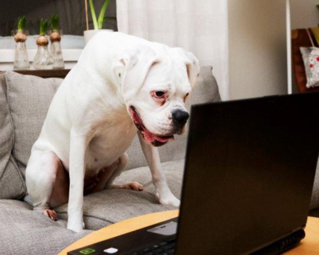 Собаки могут узнавать своих хозяев по фотографиям