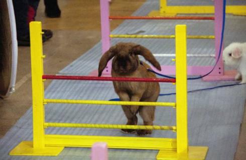 Екатеринбург принял кроличьи бега