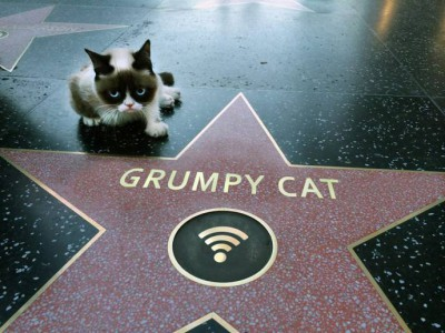 Grumpy Cat получил звезду на Голливудской Аллеи Звезд
