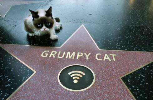 Grumpy Cat снялся в звездном клипе