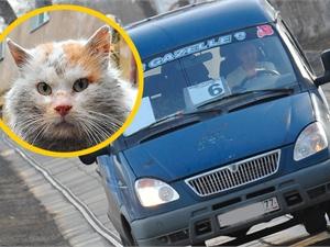 Бездомный кот прокатился в маршрутке