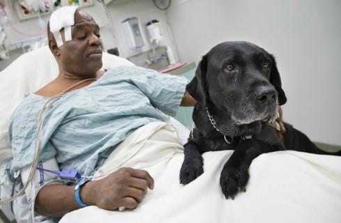 Собака-поводырь спасла слепого человека