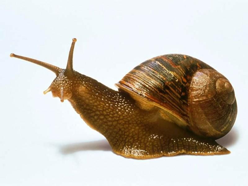 Обнаружены новые морские виды