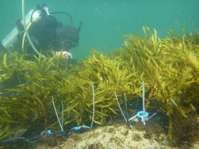 Экологи посадили водоросли