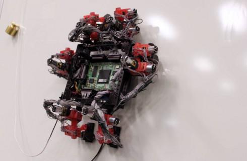 Гекконы помогли создать нового робота
