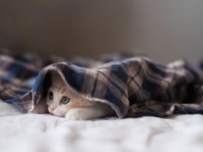 Прохлада в комнате