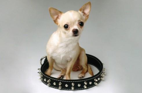 CES-2014: «умный» ошейник для вашей собаки