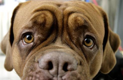Собаки-манипуляторы вынуждают любить себя