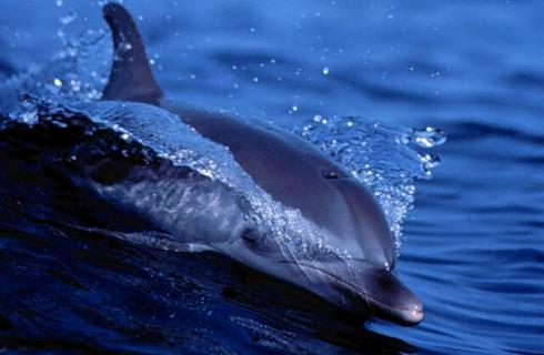 Дельфины обладают суперсилой