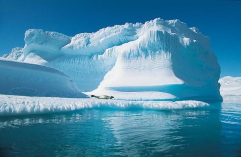 Во льдах Арктики обнаружили мох
