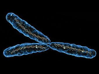 Y-хромосома