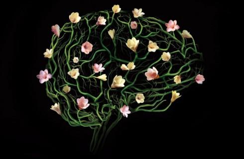 Как работает наш мозг?