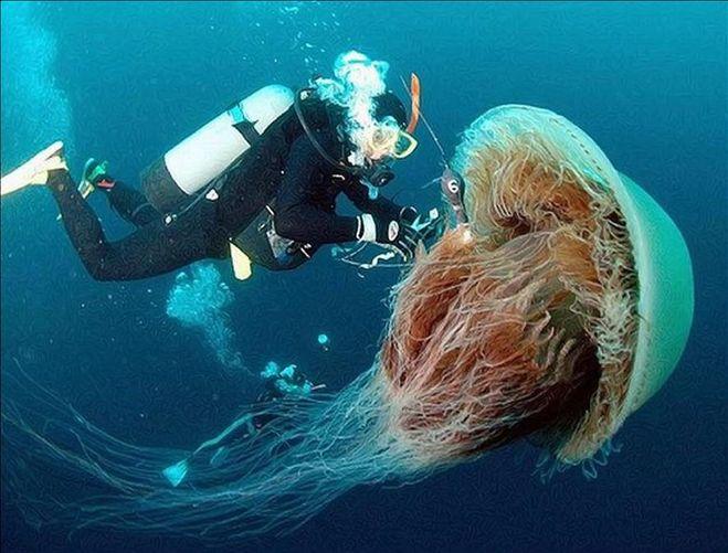 Таким морских чудищ вы не видели