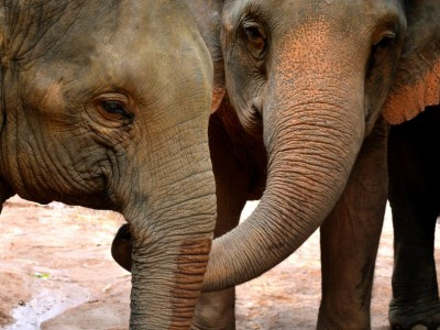 Жесты слонов