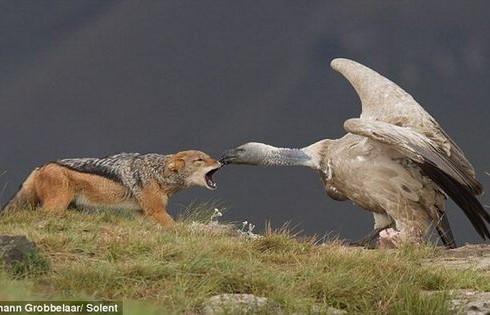 Упрямство человека сказывается на дикой природе