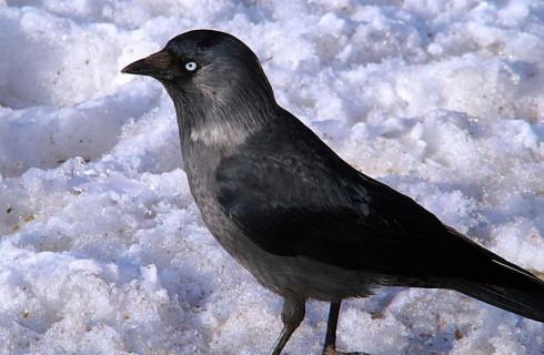 И у птиц есть свои секреты
