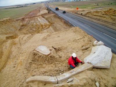 Тонны окаменелостей в Атакаме