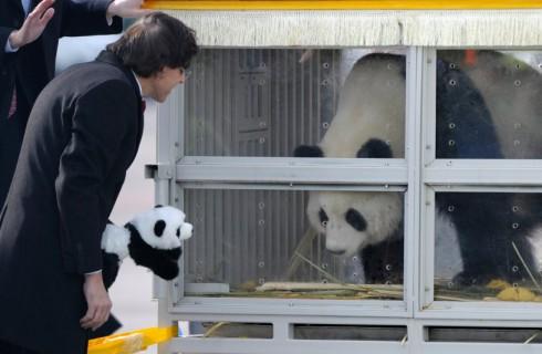 Торжественное новоселье панд