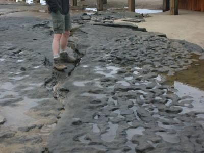 Следы на песке в Норфолке