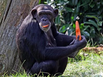 Ectypal — сетевой анализатор, который спасет животных