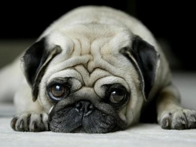 Игрушки для собак поднимут питомцу настроение