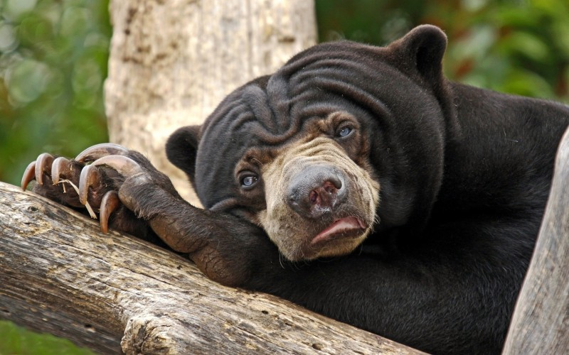 Самые стойкие млекопитающие планеты