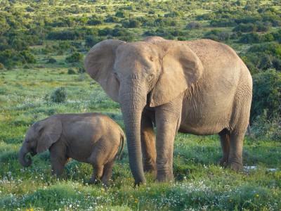 Убежище для слона —  юг Китая