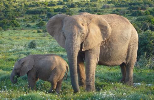Самое надежное убежище для слона