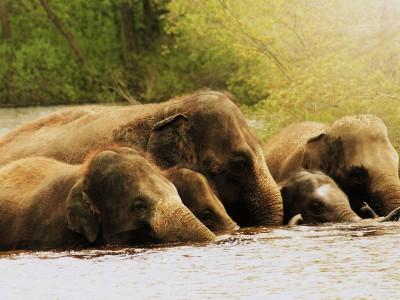 Пруды для слонов