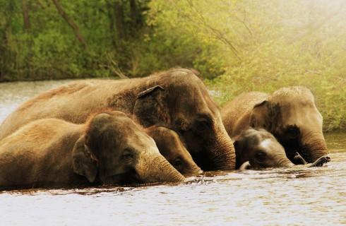 Вода способна защитить слонов