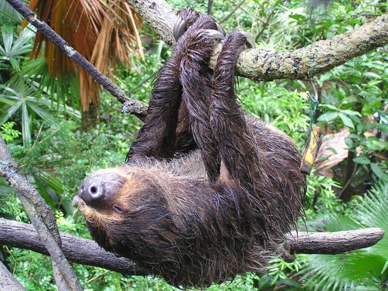 Секрет ленивцев раскрыт!