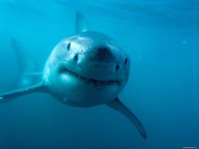 Современные акулы
