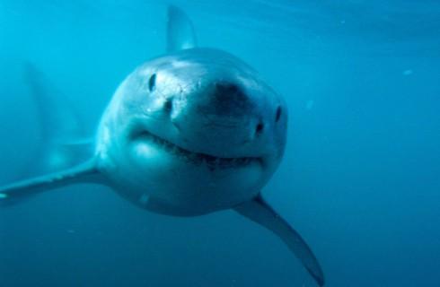 Акулы удивили ученых