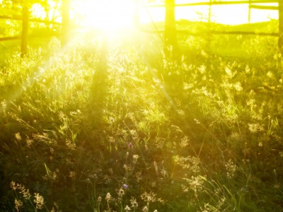 Способ похудеть: больше солнечного света